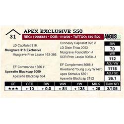 Apex Exclusive 550