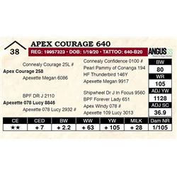 Apex Courage 640