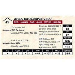 Apex Exclusive 2500