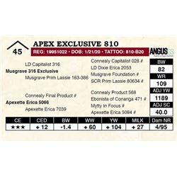 Apex Exclusive 810