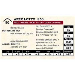 Apex Lotto  850