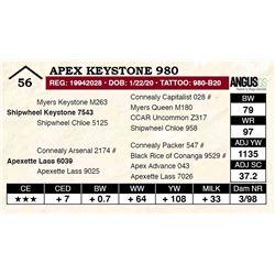 Apex Keystone 980