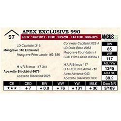Apex Exclusive 990