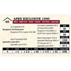 Apex Exclusive 1500