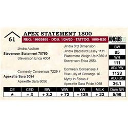 Apex Statement 1800