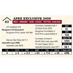 Apex Exclusive 2400
