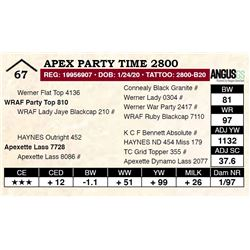 Apex Party Time 2800