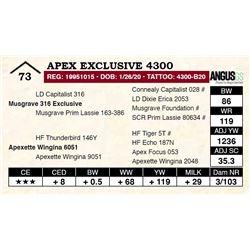 Apex Exclusive 4300