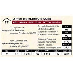 Apex Exclusive 5600