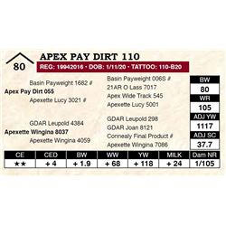 Apex Pay Dirt 110
