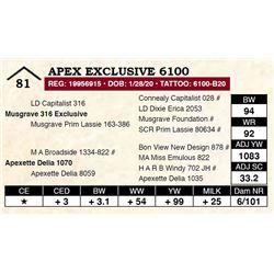 Apex Exclusive 6100