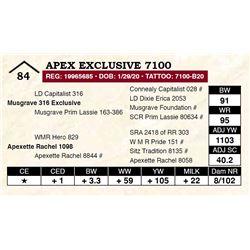 Apex Exclusive 7100