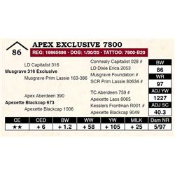 Apex Exclusive 7800