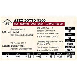 Apex Lotto 8100