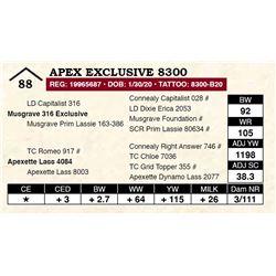 Apex Exclusive 8300