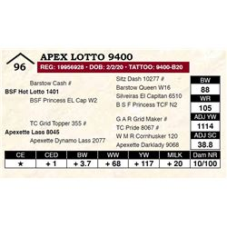 Apex Lotto 9400