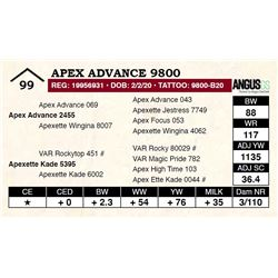 Apex Advance 9800