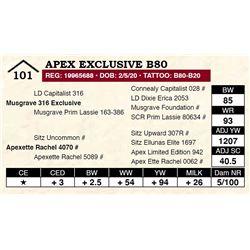 Apex Exclusive B80