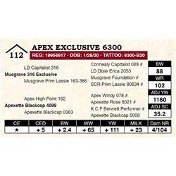 Apex Exclusive 6300