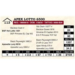 Apex Lotto 6500
