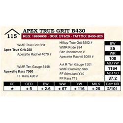 Apex True Grit B430