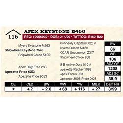 Apex Keystone B460