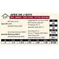 Apex DR J B570