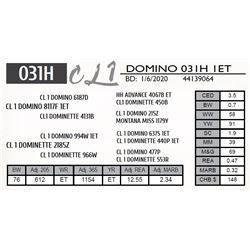 CL 1 DOMINO 031H 1ET