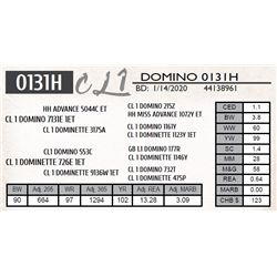 CL 1 DOMINO 0131H