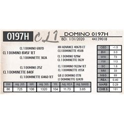CL 1 DOMINO 0197H