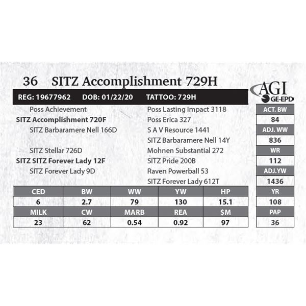 SITZ Accomplishment 729H