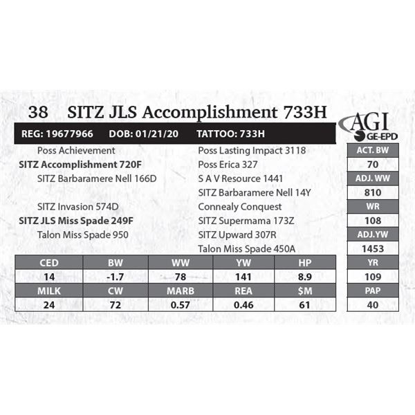 SITZ JLS Accomplishment 733H