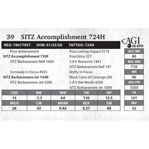 SITZ Accomplishment 724H