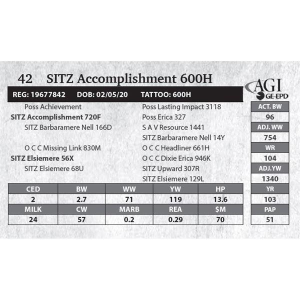 SITZ Accomplishment 600H