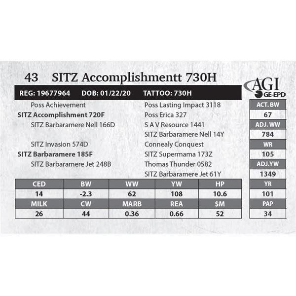 SITZ Accomplishmentt 730H