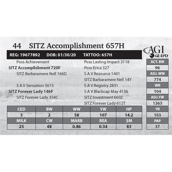 SITZ Accomplishment 657H