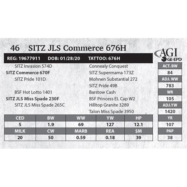 SITZ JLS Commerce 676H