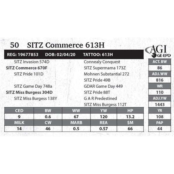 SITZ Commerce 613H