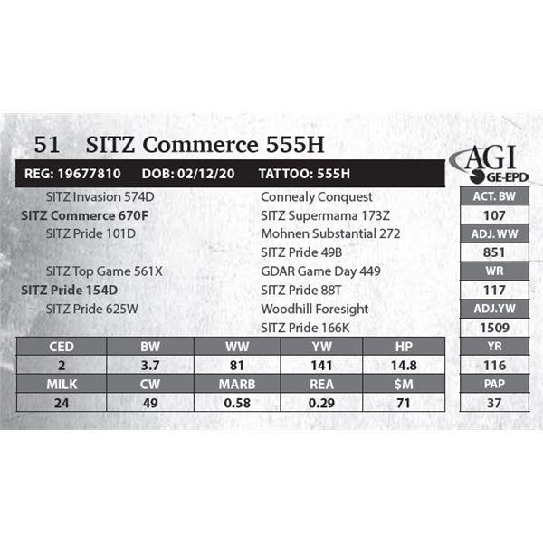 SITZ Commerce 555H