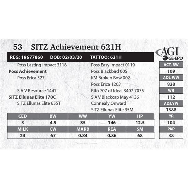 SITZ Achievement 621E
