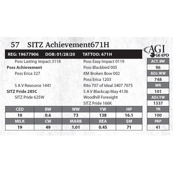 SITZ Achievement671H