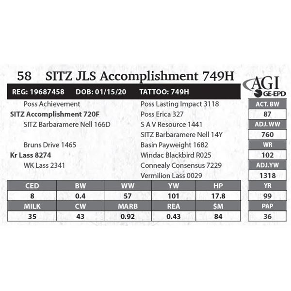 SITZ JLS Accomplishment 749H
