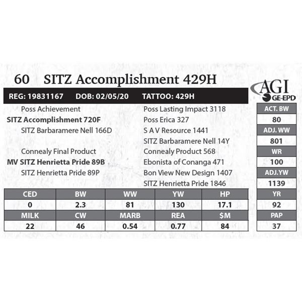 Sitz Accomplishment 429H