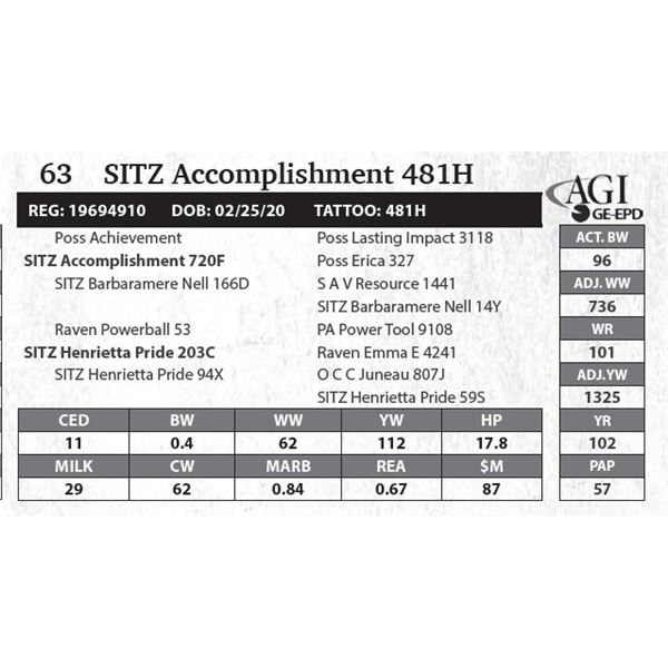 SITZ Accomplishment 481H