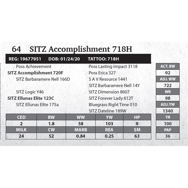 SITZ Accomplishment 718H