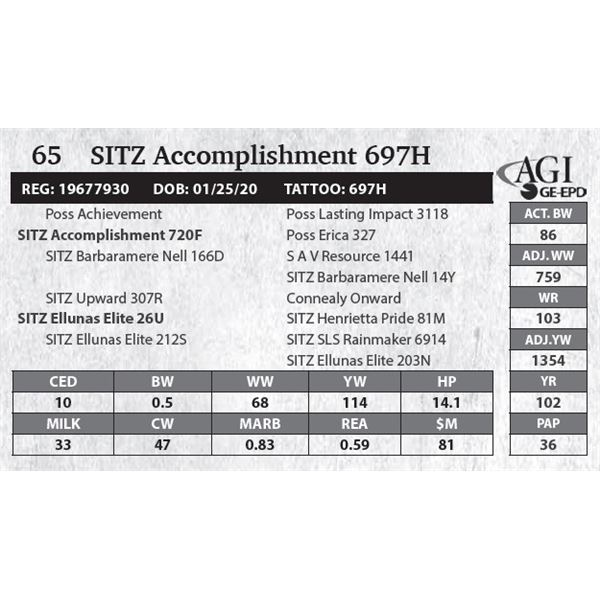 SITZ Accomplishment 697H
