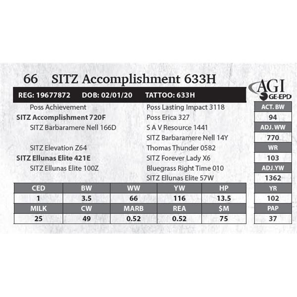 SITZ Accomplishment 633H