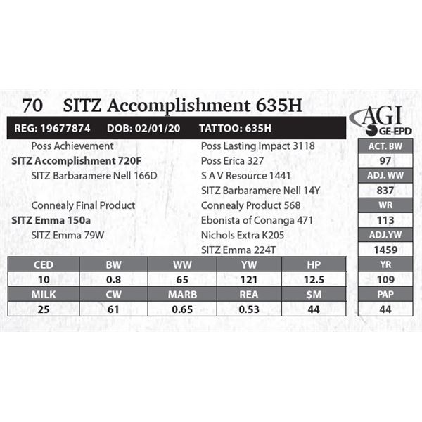 SITZ Accomplishment 635H