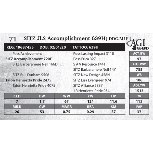 SITZ JLS Accomplishment 639H
