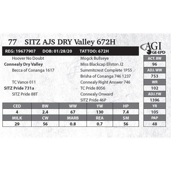 SITZ AJS Dry Valley 672H